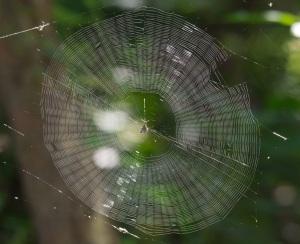 Spider Web Mandala by Hugh Vandervoort