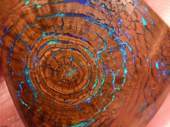 Opalized Wood Mandala