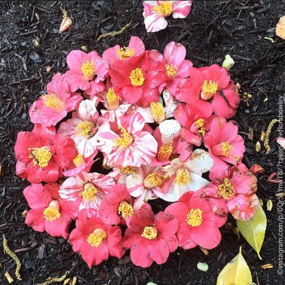 Camillia Mandala by Flora Bowley