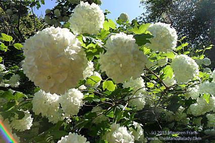 Snowball Mandalas - photograph by me
