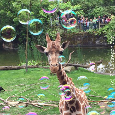 Bubbles Mandala - Photo (and bubbles) courtesy of senior keeper Laura Weiner
