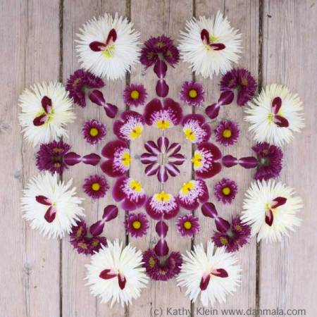 Orchids and Mums Danmala by Kathy Klien