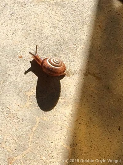 a snail and its shadow