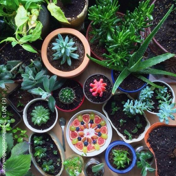 Plant Mandalas