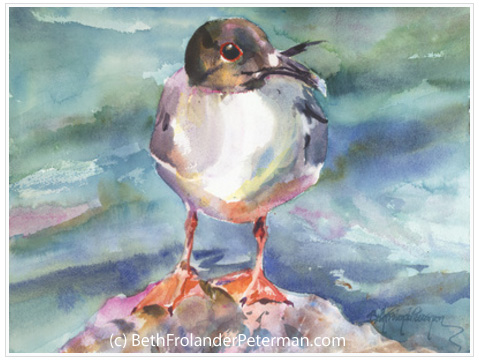 Swallow-Tailed Gull by Beth Frolander Peterman