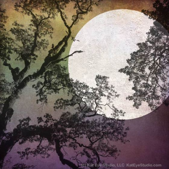 Harvest Moon by Kat Sloma