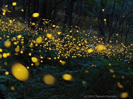 Fireflies by Takashi Zenihiro