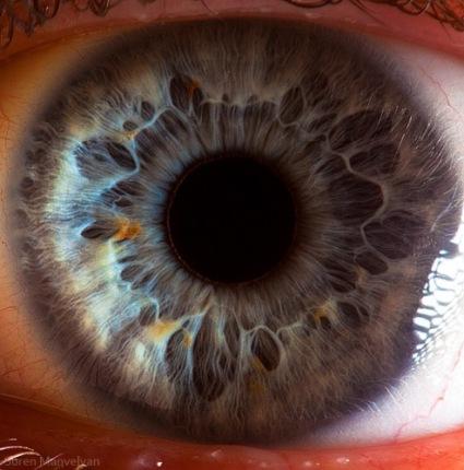 Human Eye Iris by Suren Manvelyan