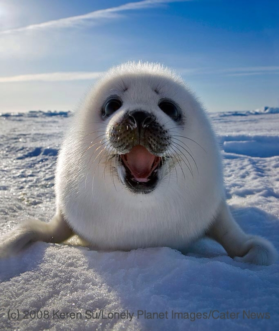 Happy Seal - photo by Keren Su/Lonely Planet Images/Cater News