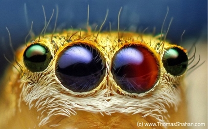 Spider Eyes by Thomas Shahan
