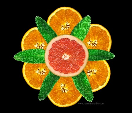 Orange Slices - photo by Bruce Harman