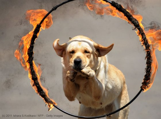 Dog Through Fire Mandala