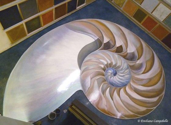 Trompe L'oeil Nautilus by Emiliano-Art.com