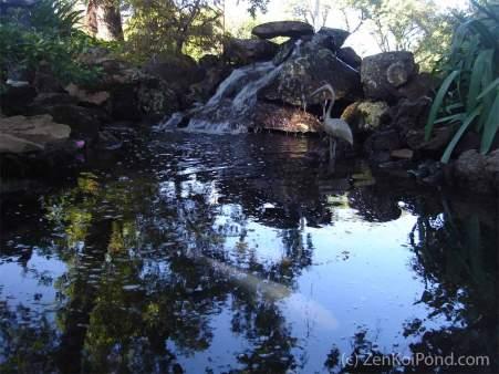 Zen Koi Pond by ZenKoiPond.com
